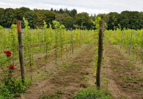 Nieuwe aanplant Wagenings Wijngoed